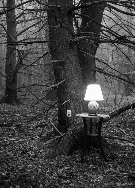Lamp in Woods