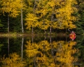 Kayaking Church Pond in the fall, Paul Smiths, Adirondacks, NY