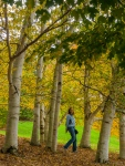 Lori walks among birches at F.R. Newman Arboretum