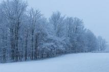 Tree line in snow storm