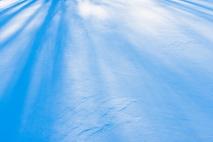 Tree shadows on fresh Winter snow