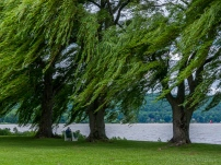 Wind in the Weeping Willows off Cayuga Lake