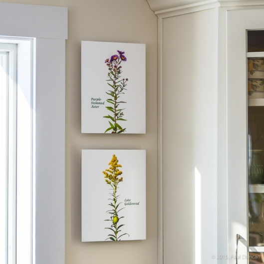 Metal prints of wildflowers