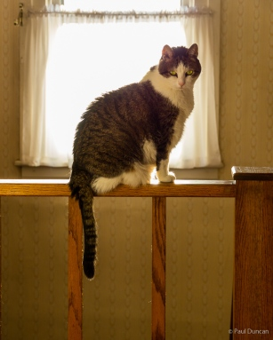 Mouse, our cat, on a railing