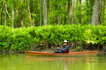 Lori pilots her Hornbeck canoe along a fern-covered bank of the inlet.