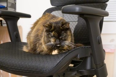 My chair was a refuge after stressful events like visits to a vet. Here she stayed for several hours after hearing her mortality being discussed.