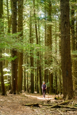 Lori walks through the hemlock forest
